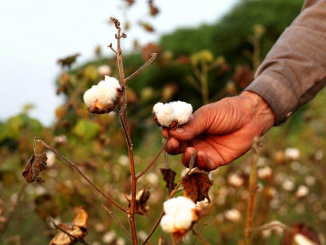 Ecco perché il cotone è il tessuto più usato dalle aziende